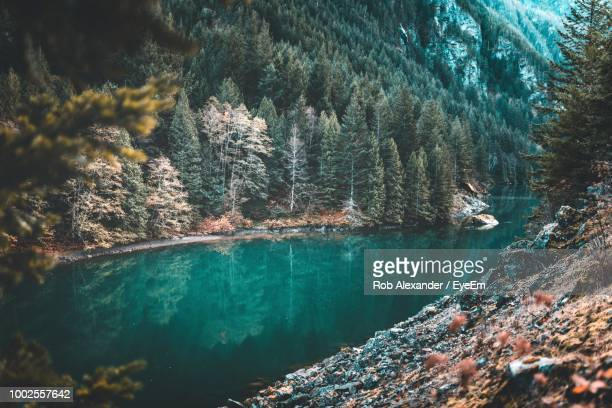 pine trees by river in forest - diablo lake stock photos and pictures