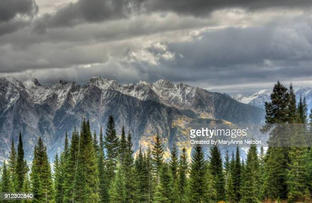 pine trees, fall and snow capped mountains in storm - san juan mountains stock photos and pictures