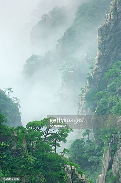 pine trees in cloud on mount huangshan - lotus flower peak stock pictures, royalty-free photos & images