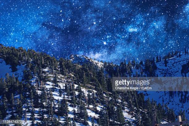 pine trees in forest against sky at night - mount baldy stock photos and pictures