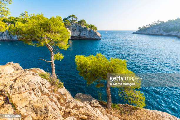 pine trees in the calanques near cassis, france - cassis stock pictures, royalty-free photos & images