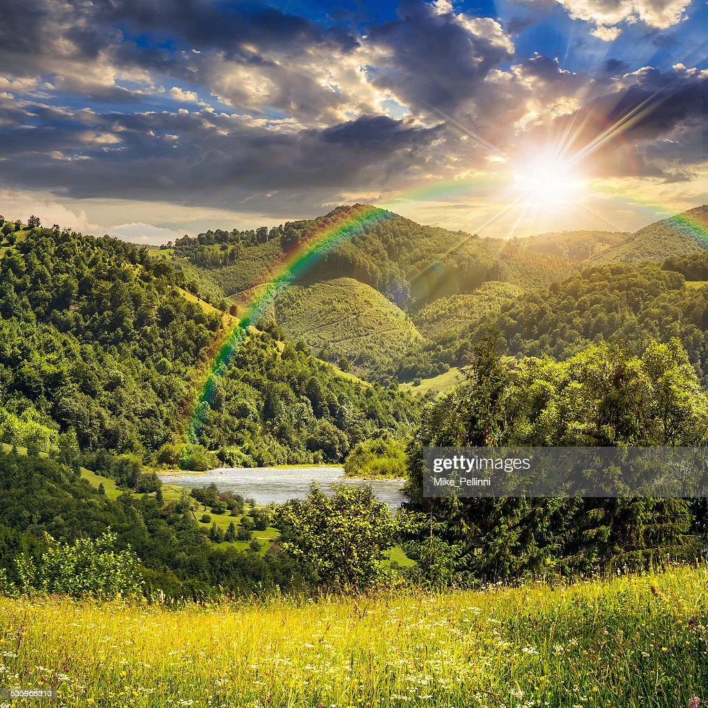 pine trees near meadow in mountains at sunset : Stock Photo