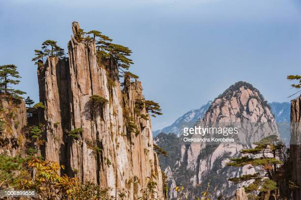 pine trees on cliff edge, huangshan mountain range in china. - anhui province stock pictures, royalty-free photos & images