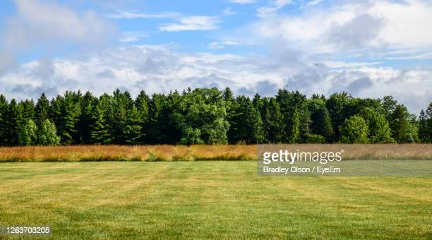 pine trees on field against sky - treetop stock pictures, royalty-free photos & images
