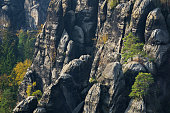 Pine trees on sandstone pillars, Schrammstein hiking area, Saxon Switzerland National Park, Saxony, Germany