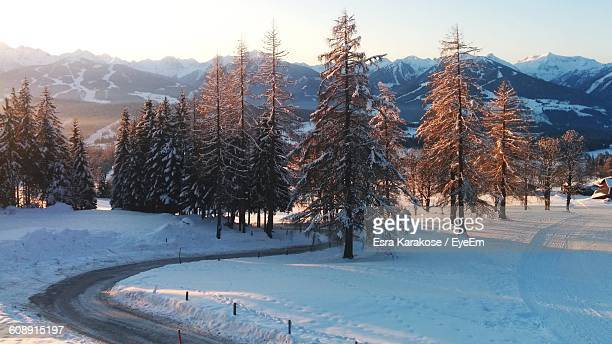 pine trees on snow covered field during winter - schladming stock pictures, royalty-free photos & images
