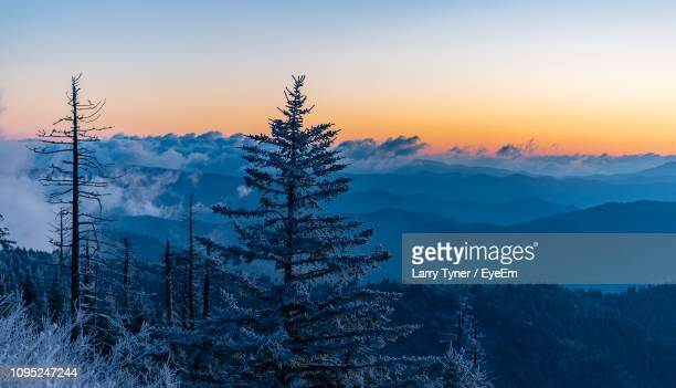 pine trees on snow covered land against sky during sunset - clingman's dome - fotografias e filmes do acervo