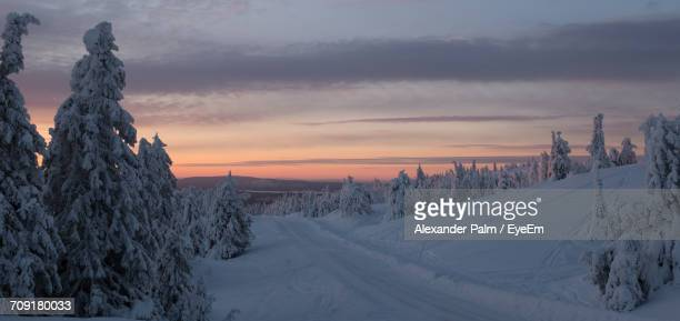 Pine Trees On Snow Covered Landscape Against Sky During Sunset