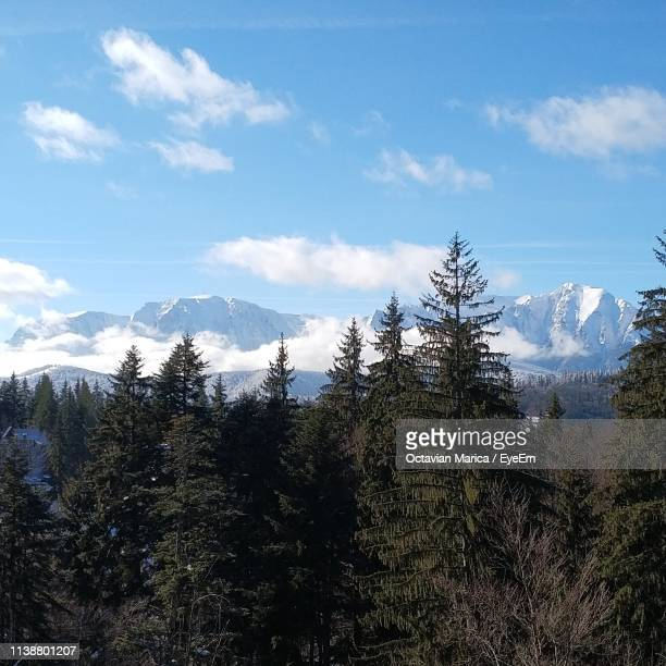 pine trees on snowcapped mountains against sky - marica octavian stock photos and pictures