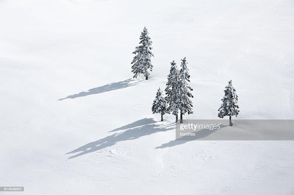 Pine Trees On White Field : ストックフォト