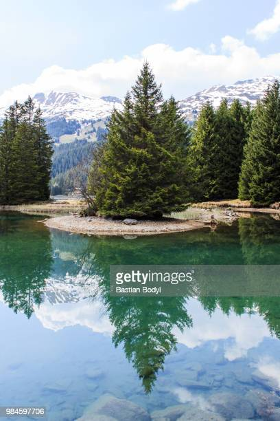 Pine trees reflected in a lake.
