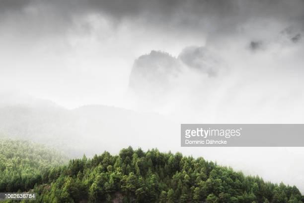 Pine trees with fog in 'Caldera de Taburiente' National Park, in La Palma island (Canary Islands)