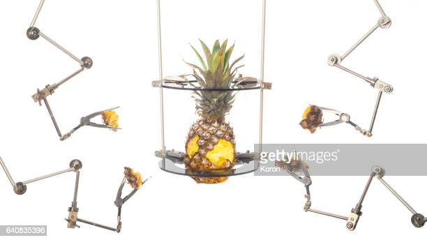 pineapple being modified - needle plant part stock photos and pictures