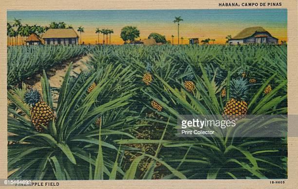 PineApple Field Habana Campo De Pinas' c1910 [C Jordi Havana Cuba c1910] Artist Unknown