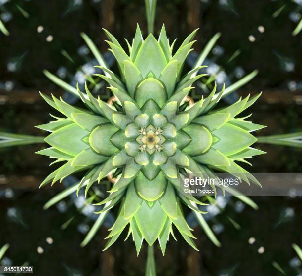 Pineapple kaleidoscope