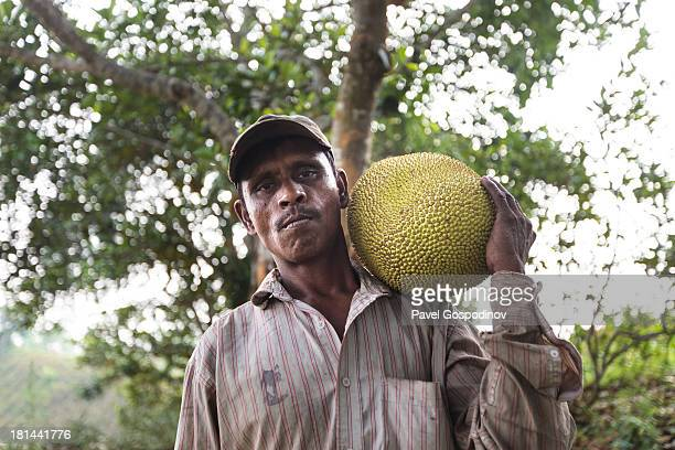 CONTENT] Pineapple plantation worker carrying a big jakfruit Pineapple plantation near Srimangal Division of Sylhet Bangladesh Indian SubContinent...