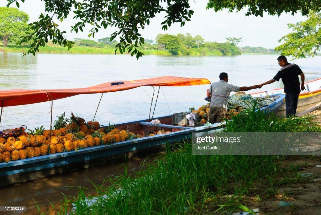 Pineapple shipment in Mompos, Colombia : Bildbanksbilder
