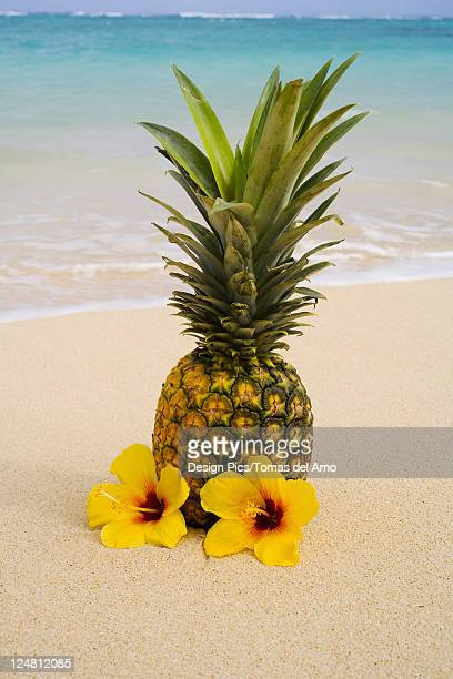 A pineapple with flowers on a tropical beach.