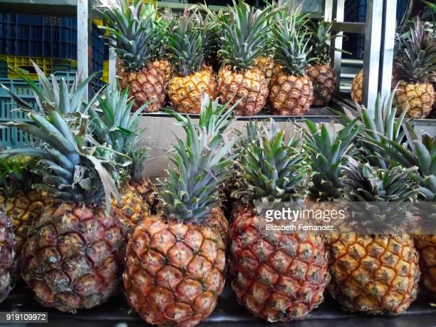 Pineapples for sale at market stall
