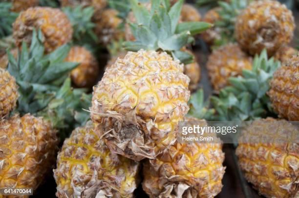 pineapples - helena price stock-fotos und bilder