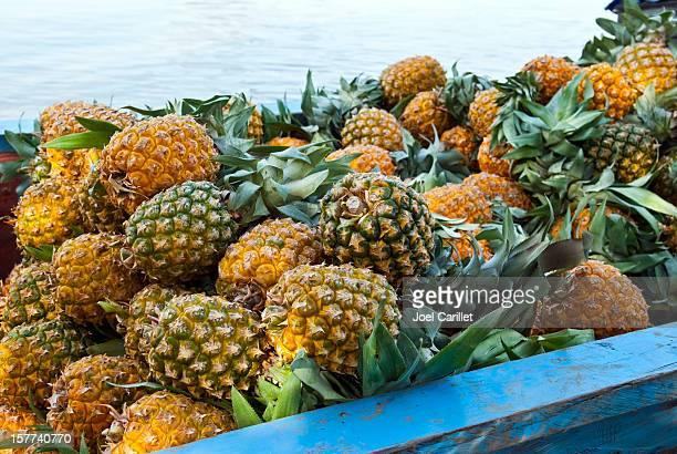 Pineapples viaje de Magdalena río en Mompos, Colombia