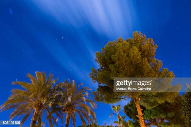 Pines and palm trees in the night