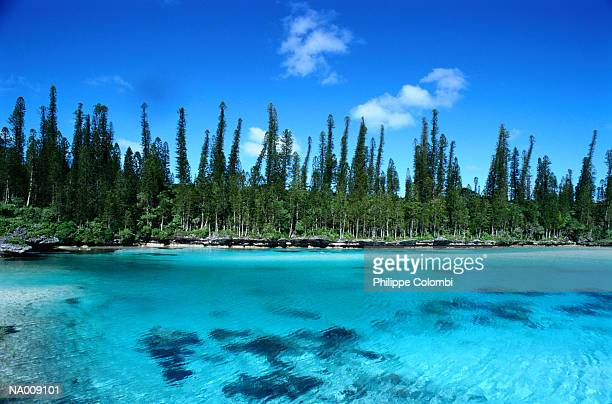 Pines Island at New Caledonia