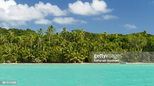 pines island - new caledonia stock photos and pictures