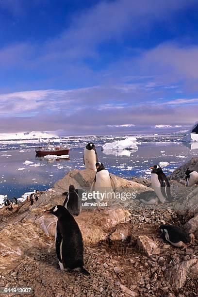 Pinguine in der Antarktis vor Forschungsschiff