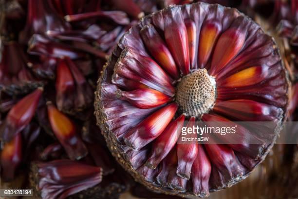 pinion, seed of araucaria. - brazil nut fotografías e imágenes de stock