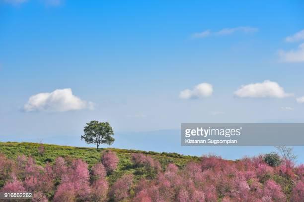 Pink alone of sakura