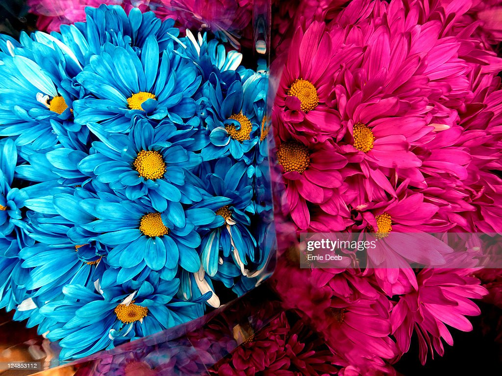 Pink and blue flowers stock photo getty images pink and blue flowers stock photo izmirmasajfo