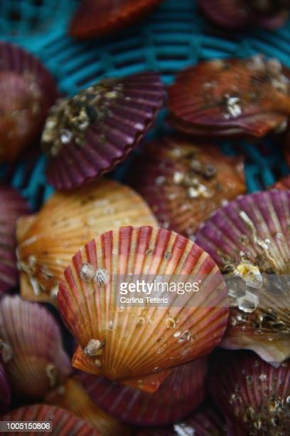 Pink and purple scallops in a blue basket for sale