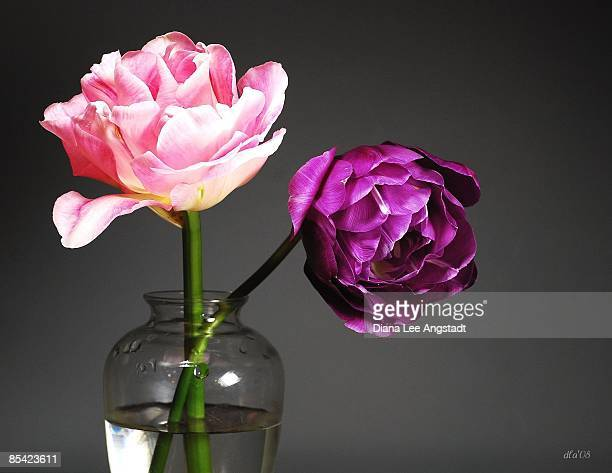 Pink and purple tulips in vase, close-up