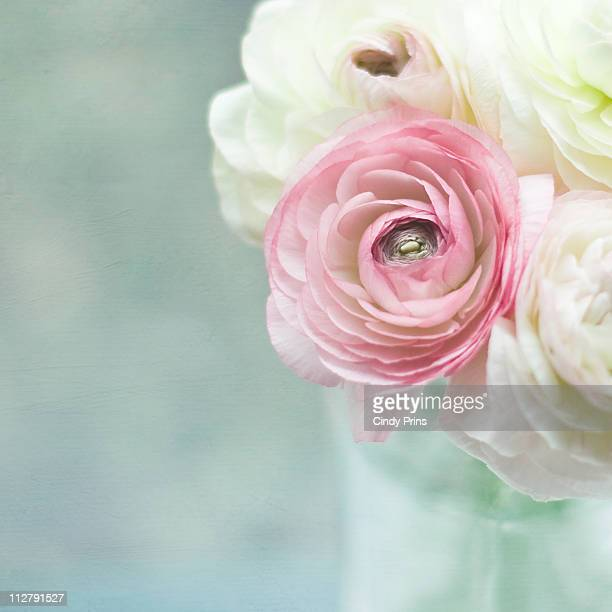 Pink and white Ranunculus flowers in a glass vase
