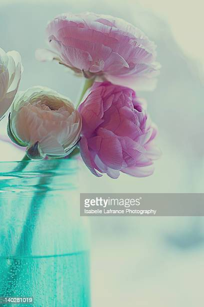 Pink and white ranunculus flowers in vase
