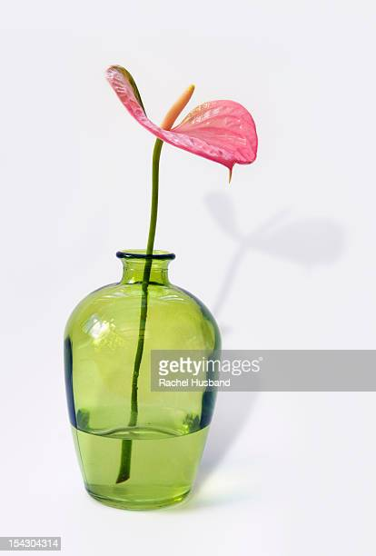 Pink anthurium flower in a green glass vase