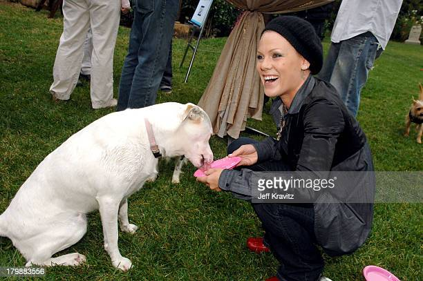 *EXCLUSIVE* Pink at the launch of PETA President Ingrid Newkirk's new book Let's Have a Dog Party with a bash at her Los Angeles home on October 14...