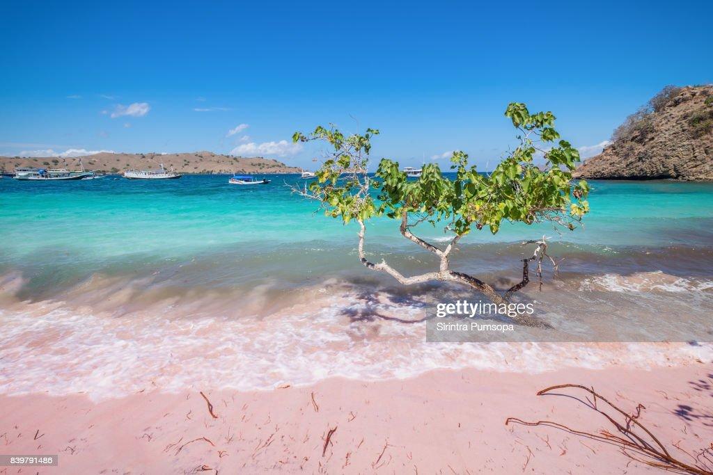 Pink Beach Of The Komodo Islands Flores Sea Nusa Tenggara ...