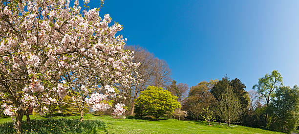 Pink Blossom Blooming Lush Green Spring Gardens Panoramic Blue Sky Wall Art