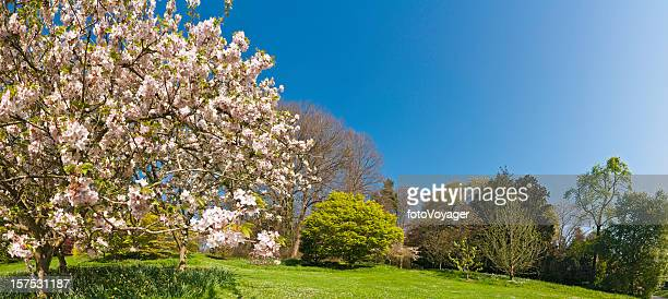 Pink blossom blooming lush green spring gardens panoramic blue sky