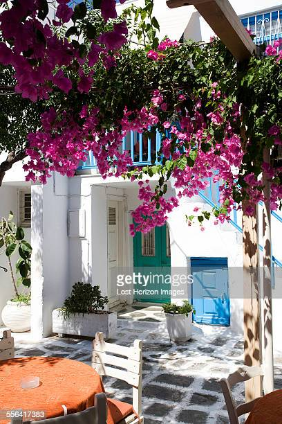 Pink blossom in house courtyard, Mykonos, Cyclades, Greece
