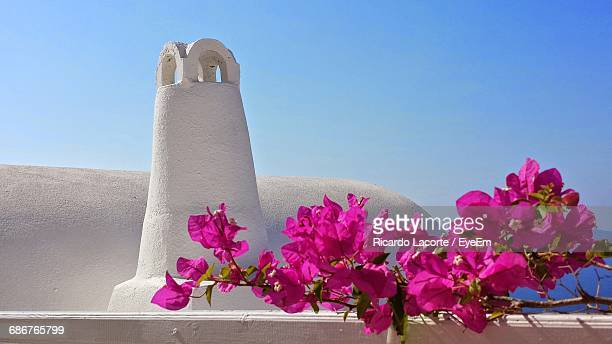 Pink Bougainvilleas Growing Against Tower At Santorini
