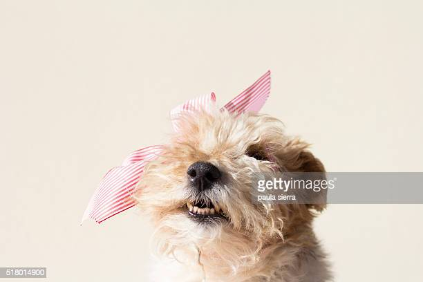 pink bow - hair bow stock pictures, royalty-free photos & images