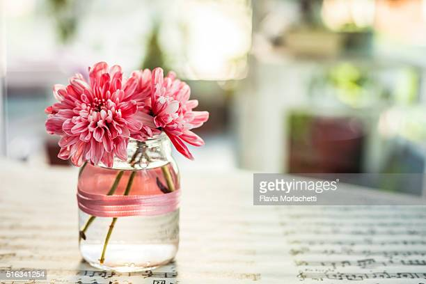 Pink chrysantemums on vase