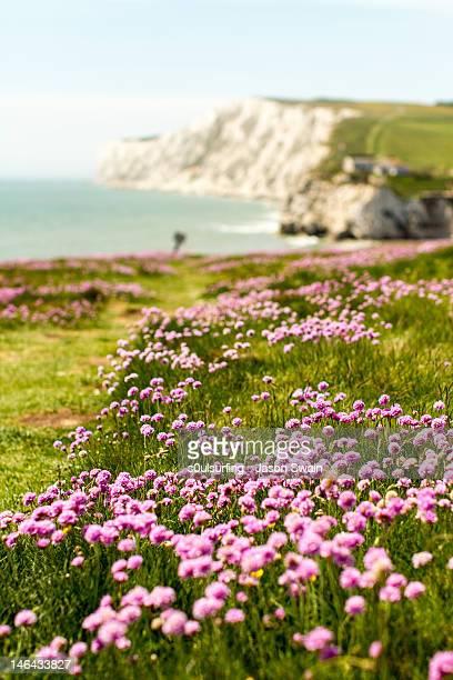 pink coastal path - s0ulsurfing foto e immagini stock