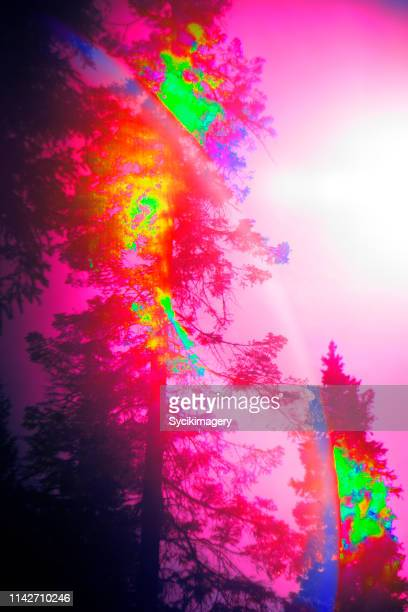 Pink colored tree art, abstract lens flare - stylized