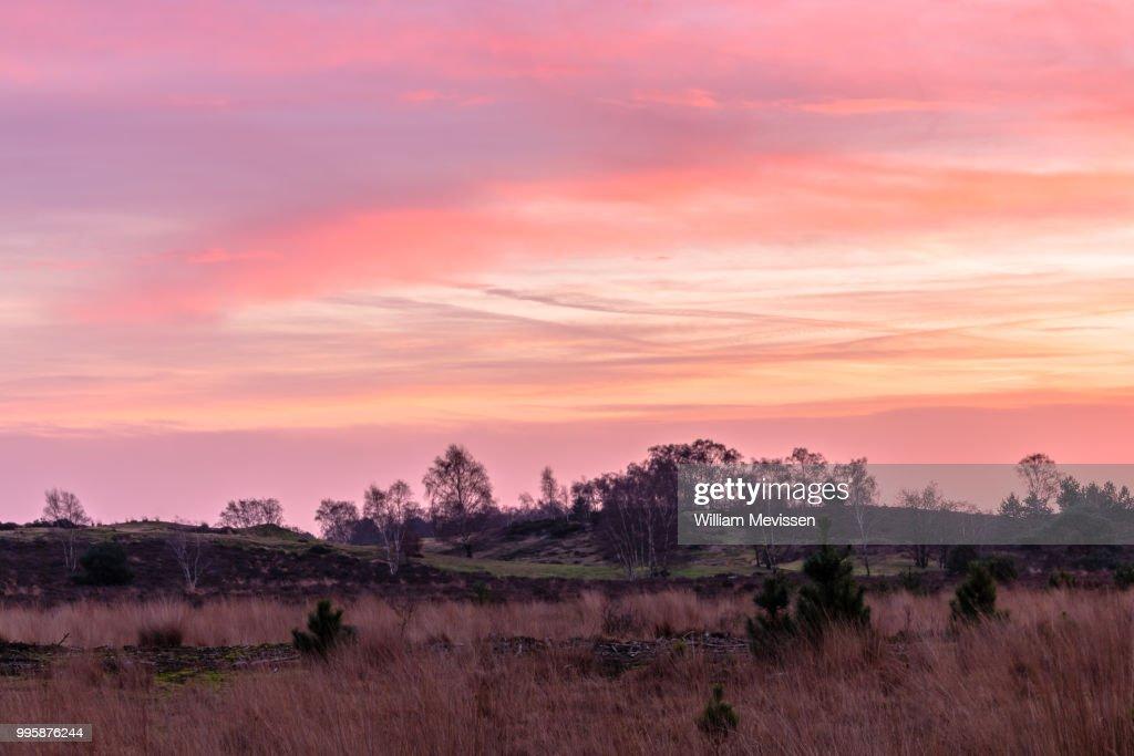 Pink Dawn : Stockfoto