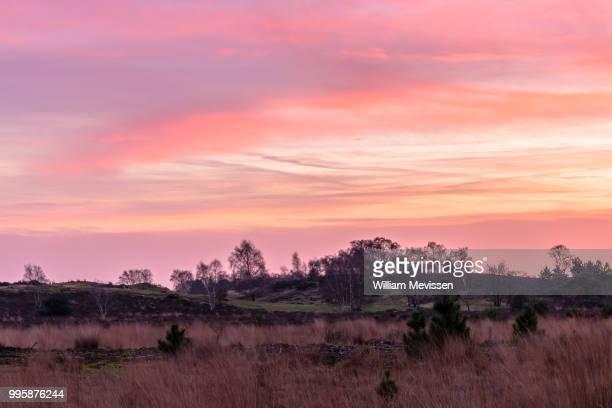 pink dawn - william mevissen bildbanksfoton och bilder