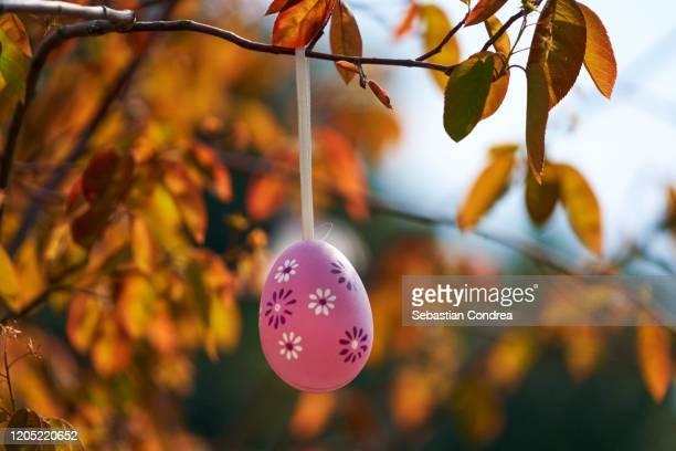 pink easter egg on a tree branch, color sunny spring day. - easter sunday stock pictures, royalty-free photos & images